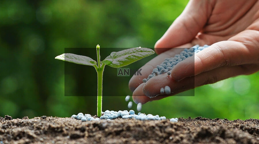 solid fertilizers from egypt
